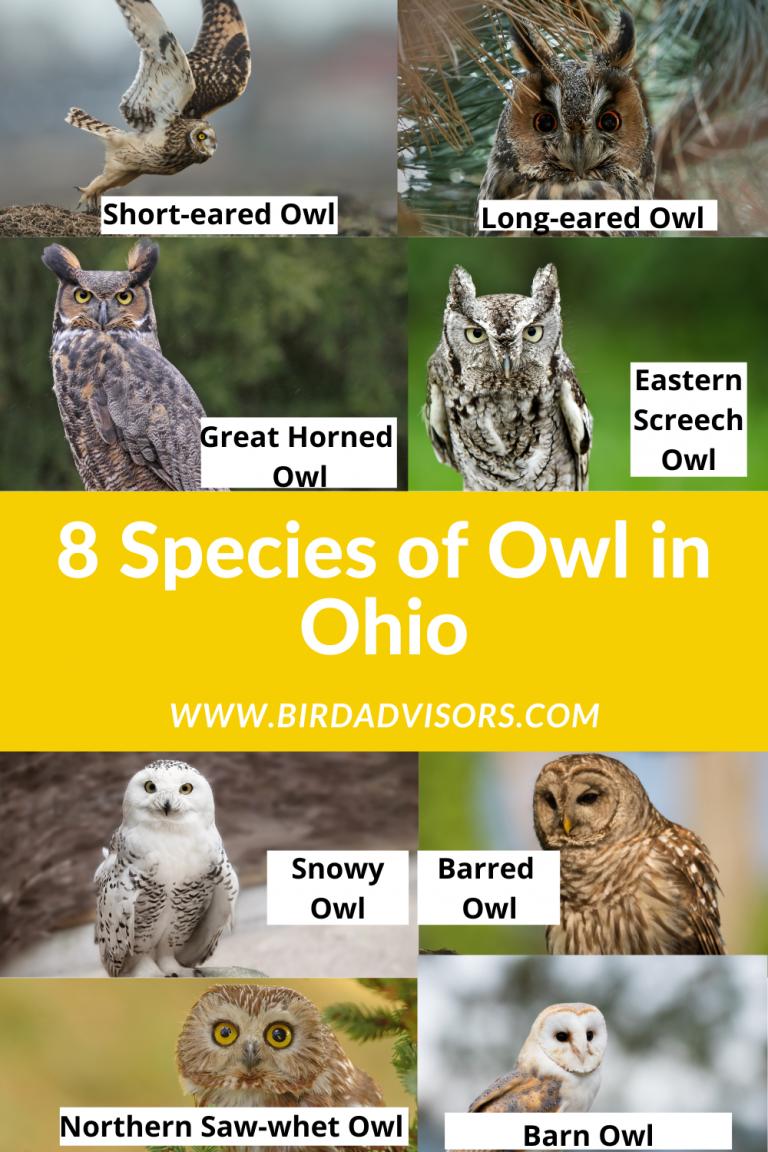 8 species of owl in Ohio photos pictures