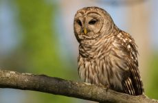 Everything You Need to Know About Owls in Florida
