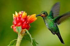 Plants, Flowers, Shrubs and Vines to Attract Hummingbirds
