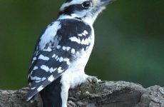 Everything You Need to Know About Woodpeckers in Florida