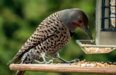 Everything You Need to Know About Woodpeckers in Connecticut