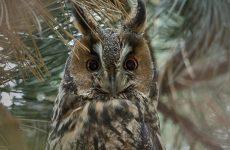 8 Species of Owls in Connecticut