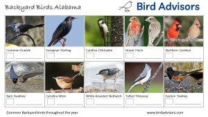 Backyard Birds Identification Worksheet Alabama Page 1