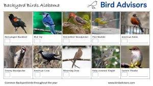 Backyard Birds Identification Worksheet Alabama Page 2