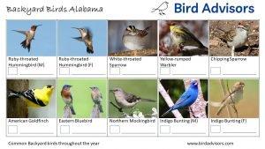 Backyard Birds Identification Worksheet Alabama Page 3