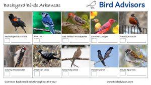 Backyard Birds Identification Worksheet Arkansas Page 1
