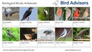 Backyard Birds Identification Worksheet Arkansas Page 2