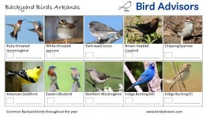 Backyard Birds Identification Worksheet Arkansas Page 3
