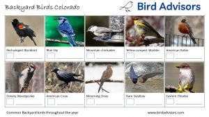 Backyard Birds Identification Worksheet Colorado Page 1
