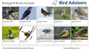 Backyard Birds Identification Worksheet Colorado Page 2