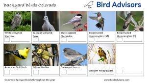Backyard Birds Identification Worksheet Colorado Page 3