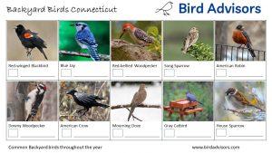 Backyard Birds Identification Worksheet Connecticut Page 1