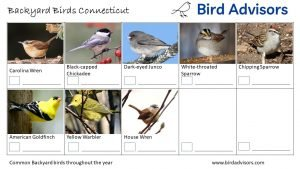 Backyard Birds Identification Worksheet Connecticut Page 3