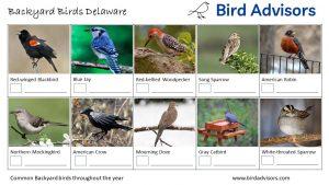 Backyard Birds Identification Worksheet Delaware Page 1