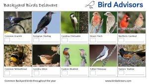 Backyard Birds Identification Worksheet Delaware Page 2