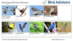 Backyard Birds Identification Worksheet Delaware Page 3