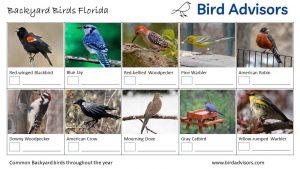 Backyard Birds Identification Worksheet Florida Page 1