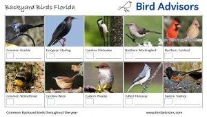 Backyard Birds Identification Worksheet Florida Page 2