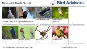 Backyard Birds Identification Worksheet Florida Page 3