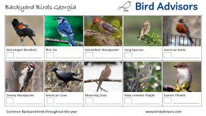 Backyard Birds Identification Worksheet Georgia Page 1
