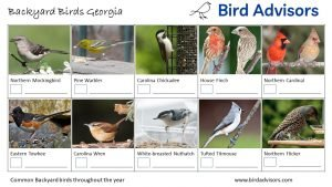 Backyard Birds Identification Worksheet Georgia Page 2