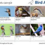 Backyard Birds Identification Worksheet Georgia Page 3