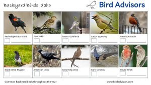 Backyard Birds Identification Worksheet Idaho Page 1