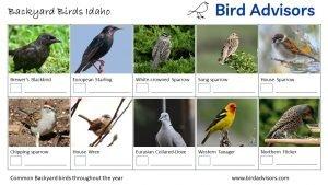 Backyard Birds Identification Worksheet Idaho Page 2