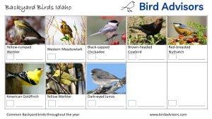 Backyard Birds Identification Worksheet Idaho Page 3