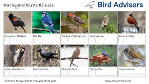 Backyard Birds Identification Worksheet Illinois Page 1