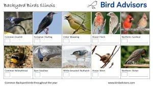 Backyard Birds Identification Worksheet Illinois Page 2
