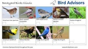 Backyard Birds Identification Worksheet Illinois Page 3