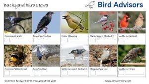 Backyard Birds Identification Worksheet Iowa Page 2