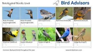 Backyard Birds Identification Worksheet Iowa Page 3