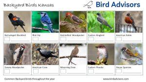Backyard Birds Identification Worksheet Kansas Page 1