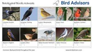 Backyard Birds Identification Worksheet Kansas Page 2