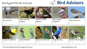 Backyard Birds Identification Worksheet Kansas Page 3