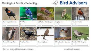 Backyard Birds Identification Worksheet Kentucky Page 1