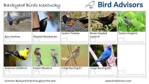 Backyard Birds Identification Worksheet Kentucky Page 3