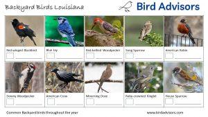 Backyard Birds Identification Worksheet Louisiana Page 1