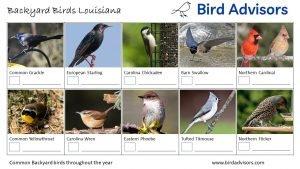 Backyard Birds Identification Worksheet Louisiana Page 2