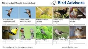 Backyard Birds Identification Worksheet Louisiana Page 3