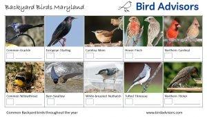 Backyard Birds Identification Worksheet Maryland Page 2