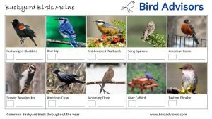Backyard Birds Identification Worksheet Maine Page 1
