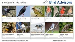 Backyard Birds Identification Worksheet Maine Page 2