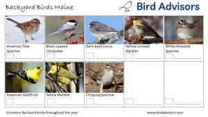 Backyard Birds Identification Worksheet Maine Page 3