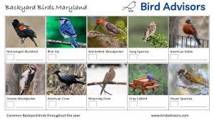 Backyard Birds Identification Worksheet Maryland Page 1