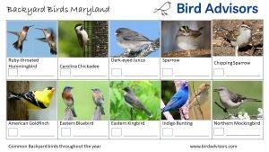 Backyard Birds Identification Worksheet Maryland Page 3