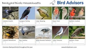 Backyard Birds Identification Worksheet Massachusetts Page 2