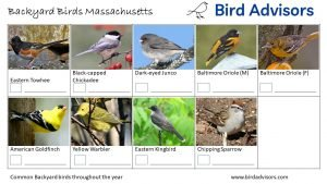 Backyard Birds Identification Worksheet Massachusetts Page 3